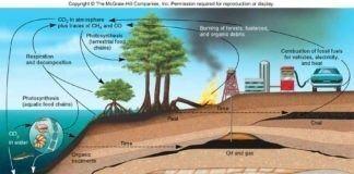 Tercemar Tanah Berakibat Pada Lingkungan