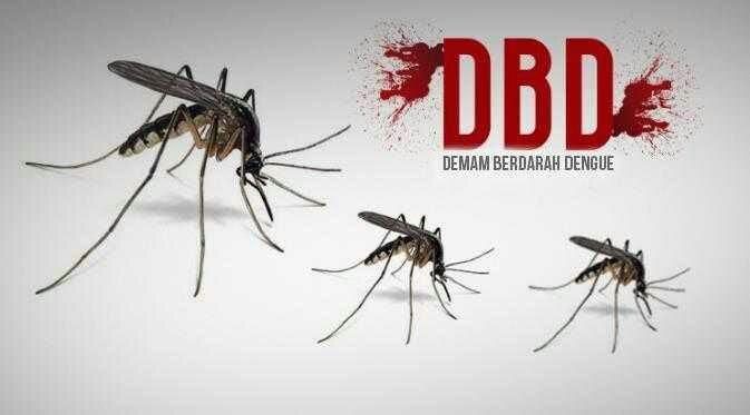 DBD Renggut Nyawa Anak Kadinkes Tapsel, Pemko Sidempuan Akui Kecolongan