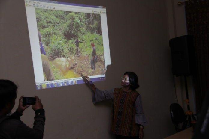 Gajah Mati di Sei Lepan, BBKSDA Tuntut Pengeluaran Izin Perkebunan di Hentikan