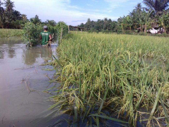 Banjir Sei Balai akan petani akan dibantu