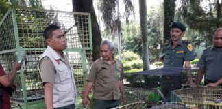 Kasus Satwa Dilindungi Elang