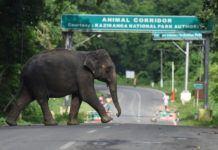 Gajah di Kaziranga National Park. (Foto: AFP)