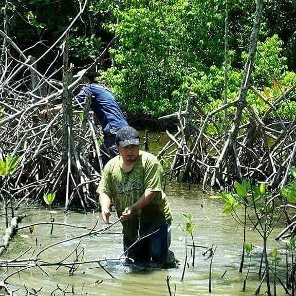 Konsisten Dalam Budidaya Mangrove