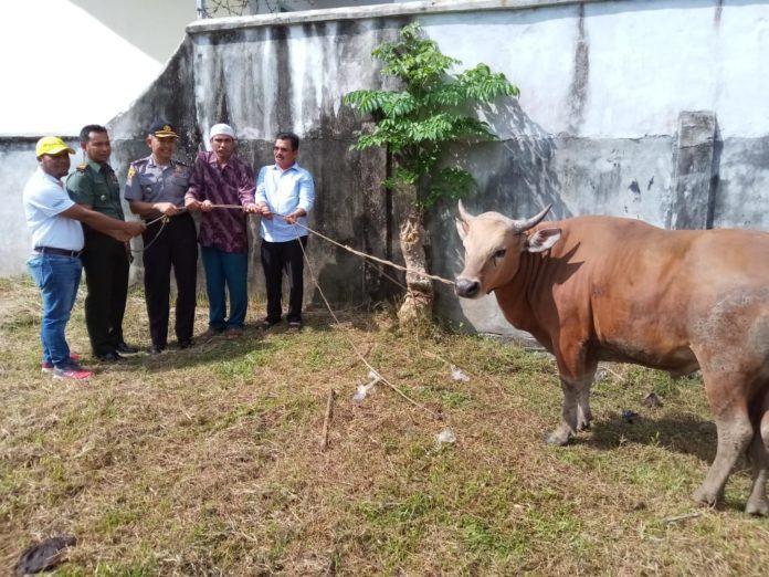 Pemerintah Kota Langsa, Sediakan 117 Hewan Kurban
