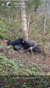 Warga Ciamis, Dihebohkan Dengan Penemuan Mayat Yang Sudah Membusuk