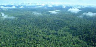 Literasi Jalanan, Ibukota Baru Ancaman Hutan Kalimantan