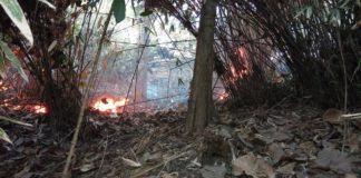 Hutan Jati Gunung Geger Bentang Terbakar