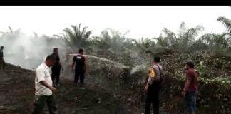 PT Tolan Tiga Indonesia (SIFEF), Parit Pembatas Kebun Terbakar
