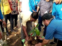 Kades Kampung Baru, Kerjasama dengan Mahasiswa ULB Program Penanaman Pohon