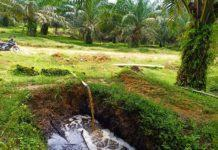 Kelola Limbah Cair, PKS PTPN IV Terapkan Sistem Land Application