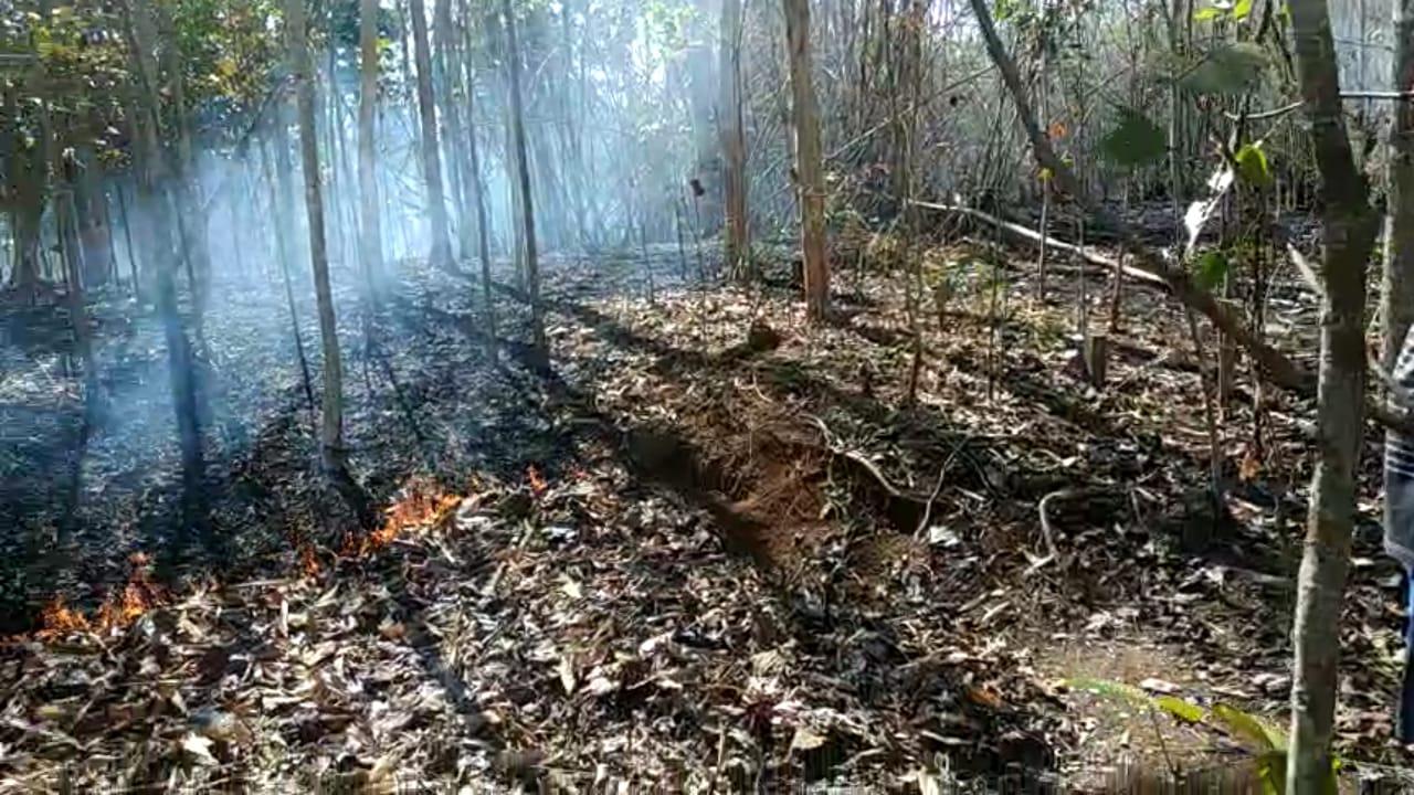 Kebakaran Kebun Ciamis, Tagana Himbau Tidak Bakar Sampah