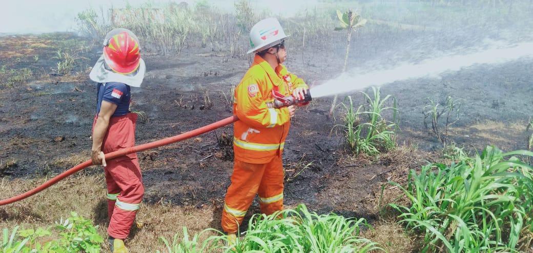 Kebakaran Kebun Pangandaran, Diduga Akibat Bakar Sampah Ditinggalkan