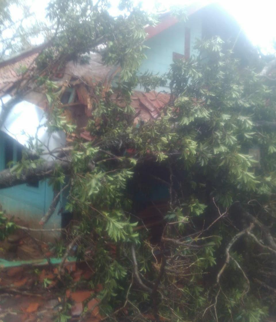 Hujan di Ciamis, Pohon Tumbang