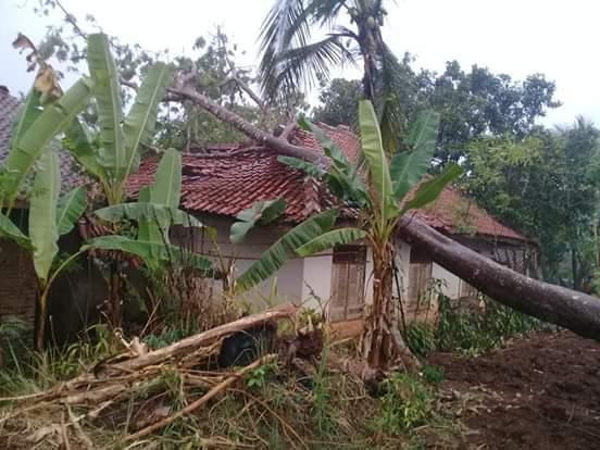 Hujan di Ciamis, Rumah Warga Tertimpa Pohon Pete