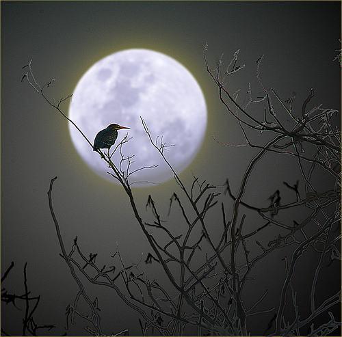 Si Pungguk Merindukan Bulan