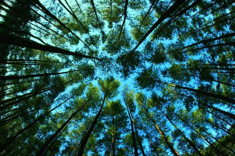 Manfaat Hutan yang Perlu Kita Ketahui dan Kita Syukuri