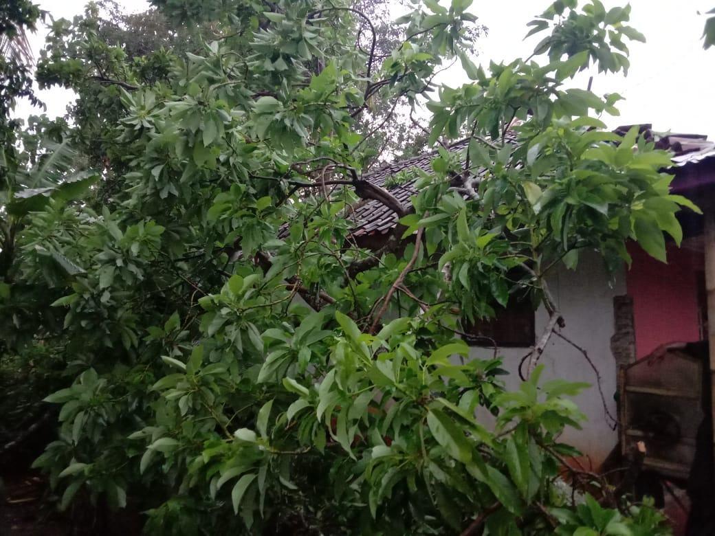 Pohon Tumbang di Ciamis Menimpa Rumah Warga, Kerugian Diperkirakan Jutaan Rupiah
