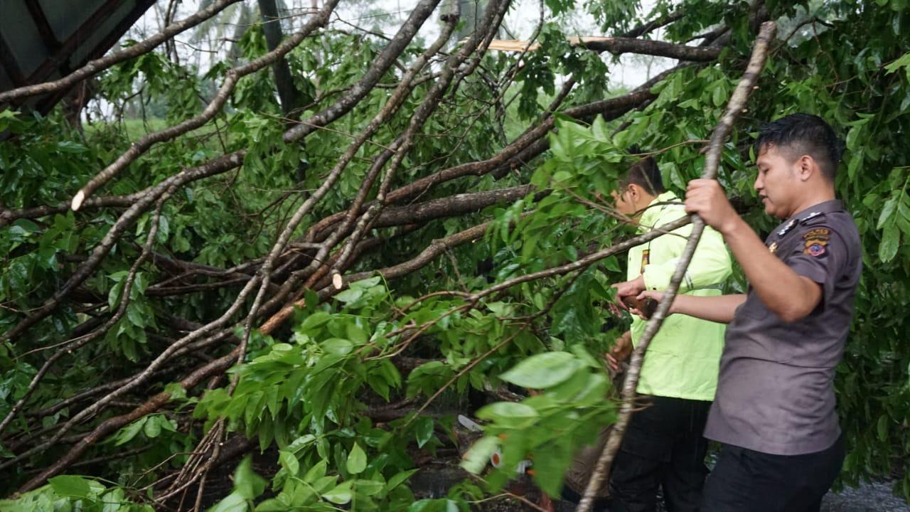 Timsus Siaga Bencana Polres Banjar, Terjun Langsung Evakuasi Pohon Tumbang di Jalan Raya