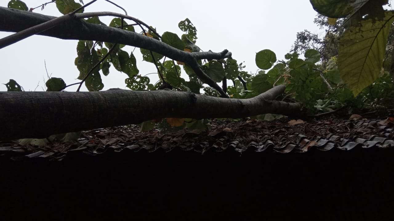 Hujan Deras Mengguyur Pamarican, 1 Rumah Warga Rusak Tertimpa Pohon