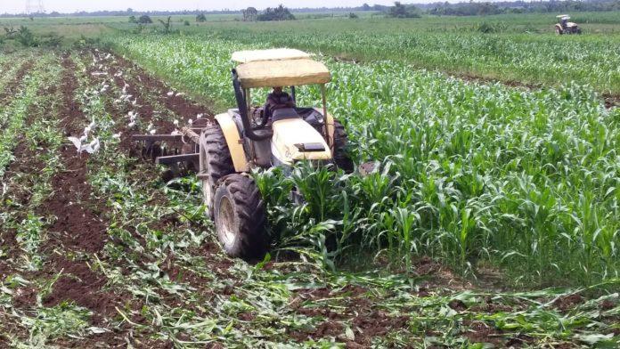 Kebun Sei Semayang PTPN II, Bersihkan Lahan Guna Tingkatkan Produksi Gula