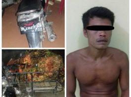 Polsek Namo Rambe, Tangkap Pelaku Pencuri Buah Kelapa Sawit
