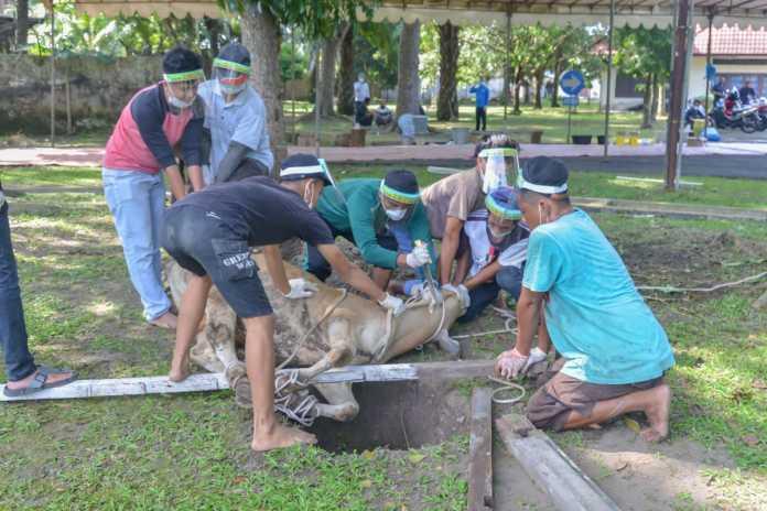 PTPN III Medan, Kumandangkan Takbir di Idul Adha 1441 H saat Kurban