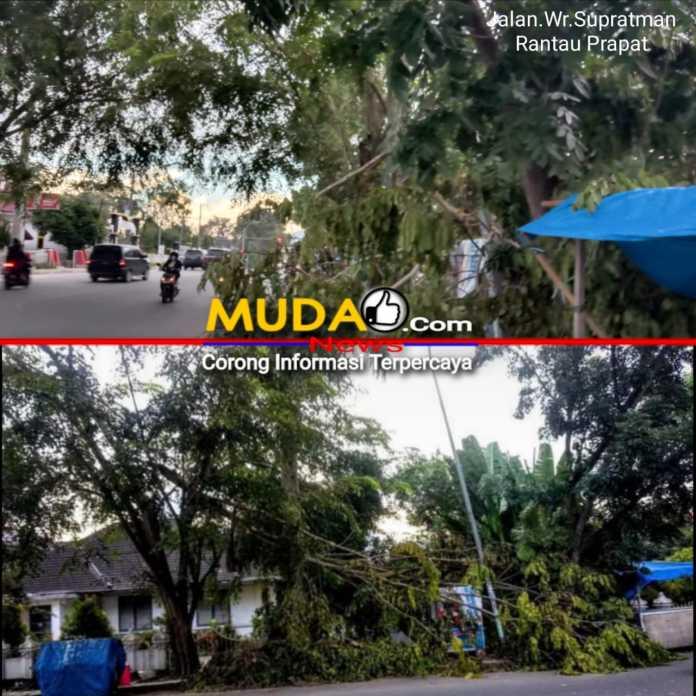 Tata Kota Labuhanbatu Terkesan Tutup Mata, Tiga Hari Pohon Tumbang Di Acuhkan Begitu Saja