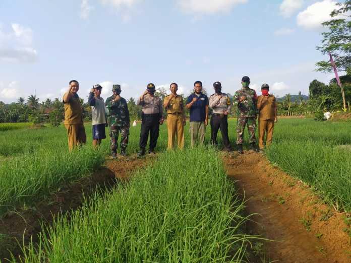 Kapolsek Pataruman, Tinjau Lahan Perkebunan Bawang Merah di Desa Binangun