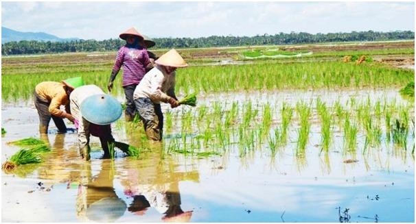 DPP HIPMA MPH: Pemerintah Perlu Maksimalkan Penyerapan Beras dari Petani