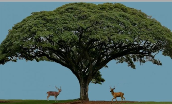 Ketika Pohon Berbeda dengan Buahnya